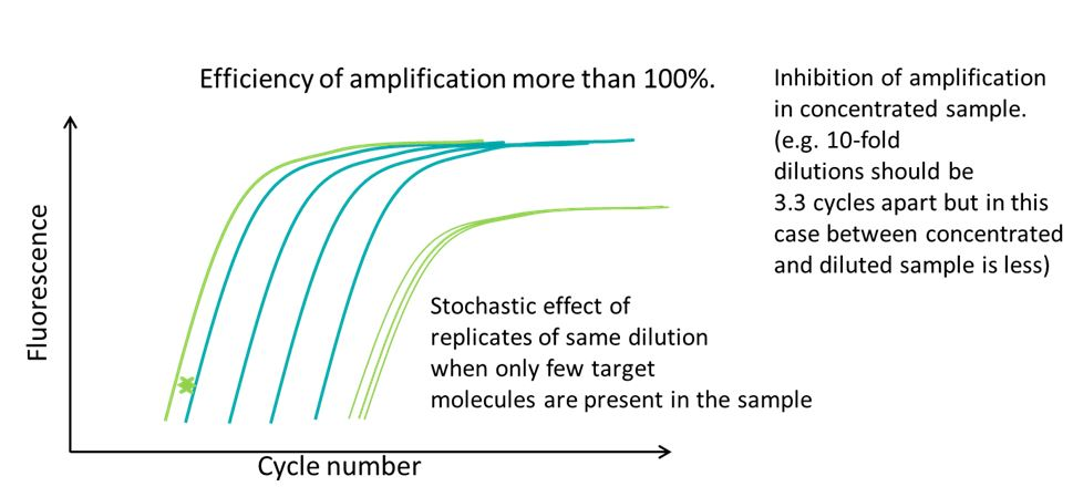 Amplification Efficiency_2
