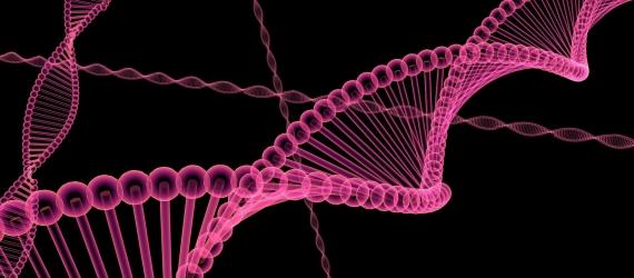 DNA amplification efficiency