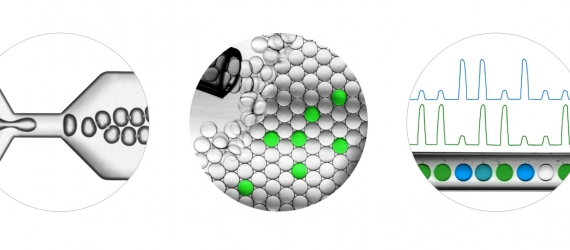 BioRad_Droplet workflow_caption_full image