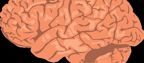 brain-308580_1280
