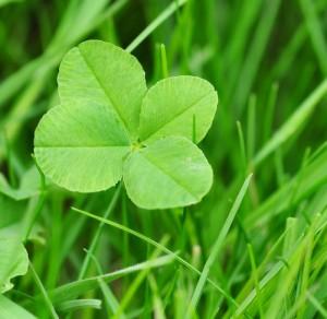 four-leaf-clover-genes_mutation
