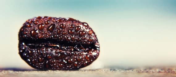 a background with a coffee bean in macro (extremely shallow dept