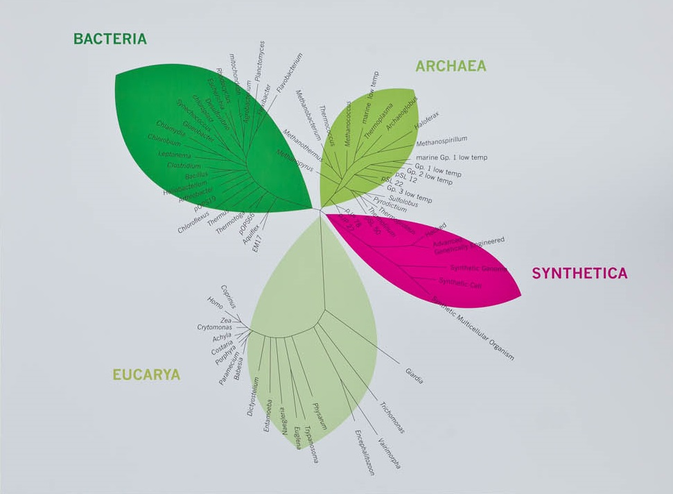 Could synthetic biology bring us a new branch of life, the Synthetica, as labelled here? Click image for larger version. Copyright: Z33 Art Centre on Flickr via CC 2.0