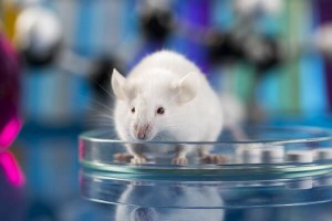 Zika vaccine testing animal