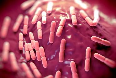 bigstock-Lactobacillus-bacteria-93129974