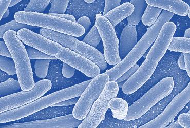 evolution bacteria