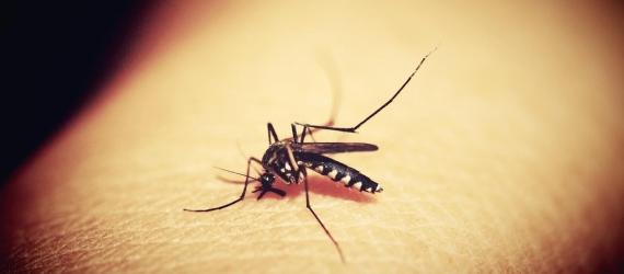 GM Mosquitos and Zika