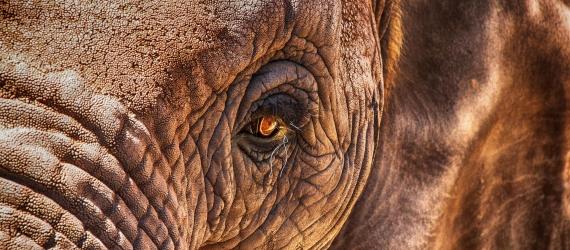 Mammoth & CRISPR (1)