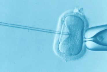 Gene-Edited Human Embryos
