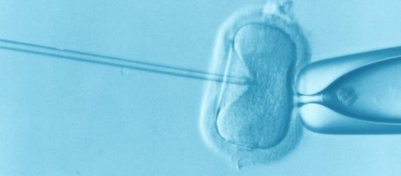 Gene-Edited Human Embryos