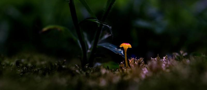 Mushroom.1
