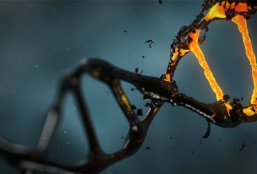 DNA molecular scissors