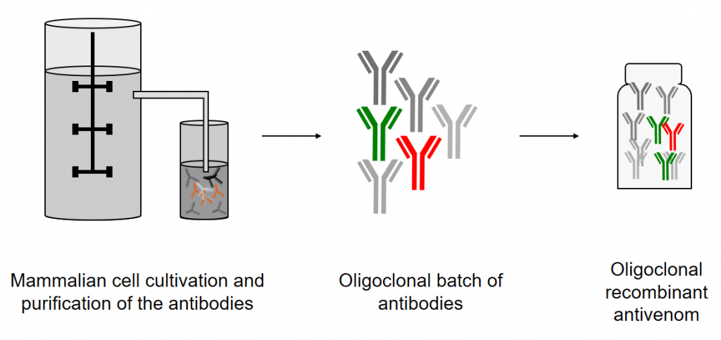 Oligoclonal expression of human antibody mixtures in mammalian cells
