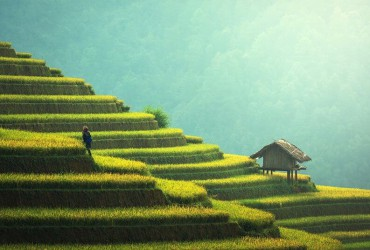 Rice fields