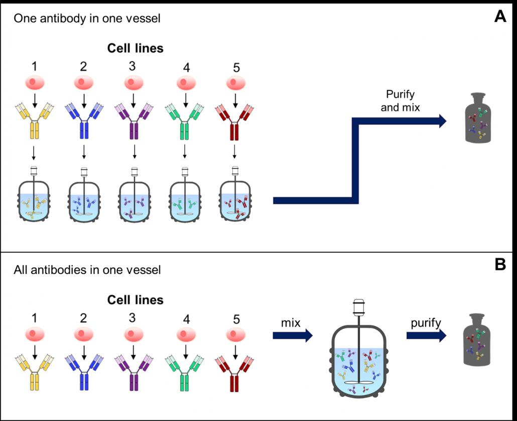 Example of ways to produce antibody mixtures.